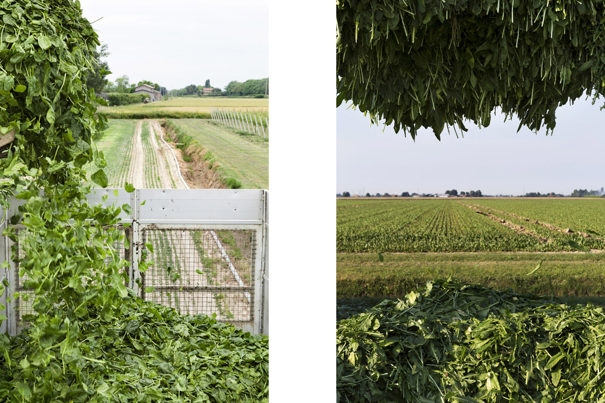 storytelling, fotografia, commerciale, aziendale, orogel, cooperativa, soci, agricoltura